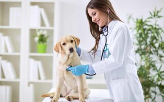 Máster business en medicina veterinaria