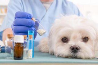 Máster en farmacología veterinaria